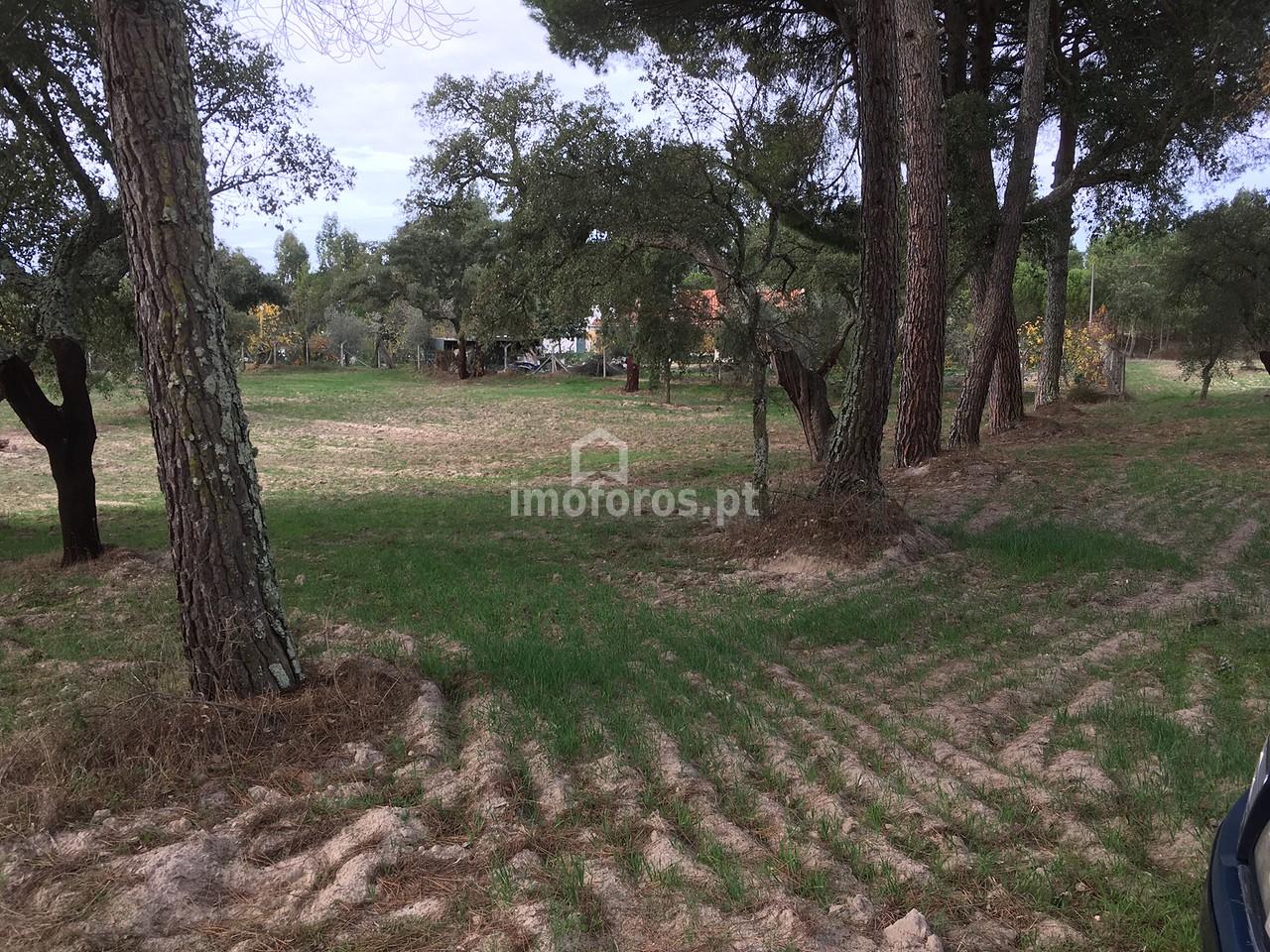 terreno cortiçadas de lavre 1