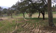 terreno cortiçadas de lavre