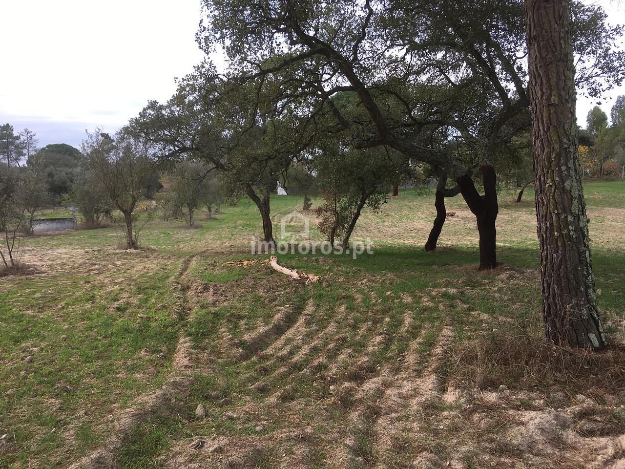 terreno cortiçadas de lavre 2